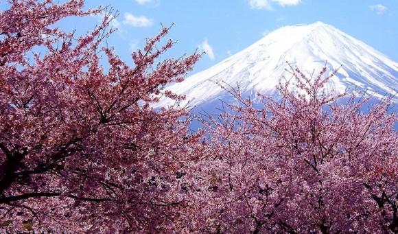 開花 予想 2021 桜の