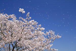 て と 吹か 忘 意味 を 春 ば あるじ なし 匂 な の 花 梅 東風 おこせよ ひ る